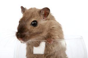Mäuse fangen in der Wohnung