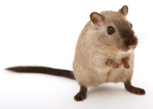 Mäuseplage im Haus